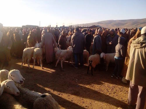 بيع الماشية في سوق حمام الضلعة (الترا صوت)