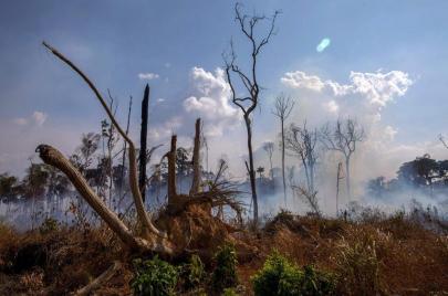 وجه السياسة القبيح في الأمازون.. حكاية غابات تناضل من أجل البقاء