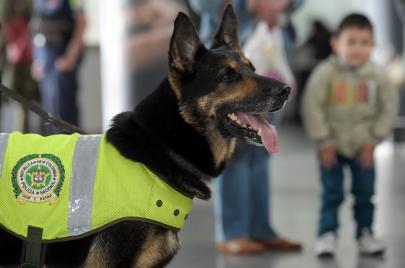 مكافأة بآلاف الدولارات لقتله.. ما قصة كلب البوليس الذي أقلق عصابات كولومبيا؟