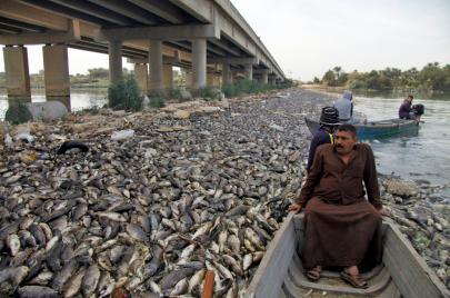 نفوق آلاف أطنان الأسماك في العراق.. لماذا؟