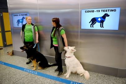 فنلندا: الكلاب قادرة على كشف المصابين بكورونا بدقة تصل إلى 100 بالمئة