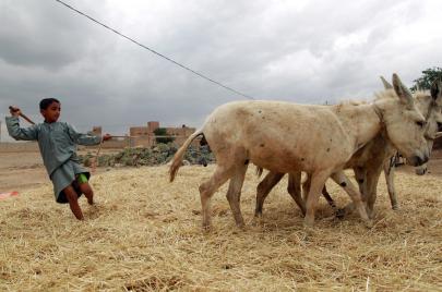 معتقدات يمنية تهوى قتل بعض الحيوانات