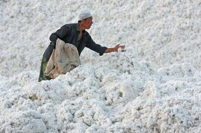القطن الصيني محظور في الولايات المتحدة الأمريكية بسبب العمالة القسرية