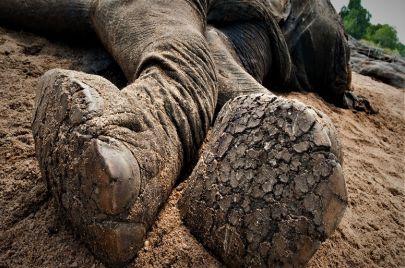 تهديد بالانقراض وجولات صيد جائر.. الغابة الأفريقية في خطر